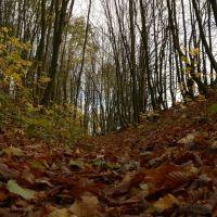 Осенняя тропа, Копыль