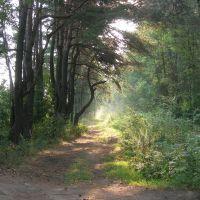 Утро в лесу, Пинск