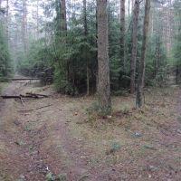 Лесные тропы, Пинск