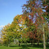 осень золотая, Солигорск