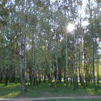 Ковалева Лоза _березовая роща, Солигорск