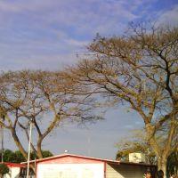 Árboles de Otoño, Косамалоапан (де Карпио)