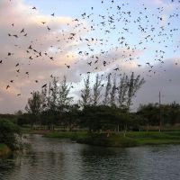 ADM ecological area, Минатитлан