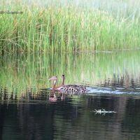 Pichichi Ducks ADM Golf Course Minatitlan, Минатитлан