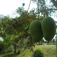 Los Mangos, Пануко