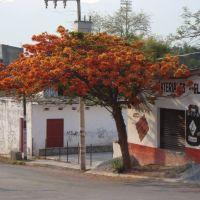 Iguala florece, Игуала