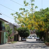calle con lluvia de oro, Игуала