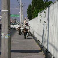 Aun es buen transporte (Acambaro, Gto.) Centro, Акамбаро