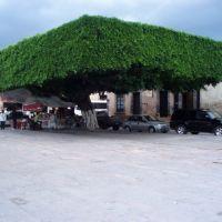 Gigante verde cuadrado., Акамбаро