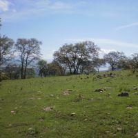 Reserva natural del cerro del Toro, Акамбаро