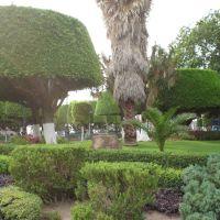 Jardines plaza municipal, Ирапуато