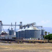 Industrias Bachoco Celaya, Селая
