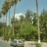parque morelos desde la calzada agustin castro (morelos park on the road agustin castro), Гомес-Палацио