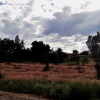 El campo alrededor de la Concha Acustica, Дуранго