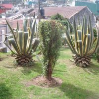 jardin del centro cultural felipe angeles, Гуэхутла-де-Рейес