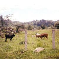 Zietla 2001, Иксмикуилпан