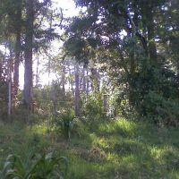 bosque, Иксмикуилпан