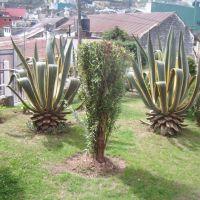 jardin del centro cultural felipe angeles, Иксмикуилпан