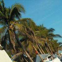 Palmeras del hotel Pacífico Azul, Манзанилло