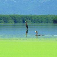 Fauna (Laguna Valle de las Garzas), Манзанилло