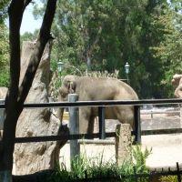 Elefante en el Zoológico de Morelia, Морелиа