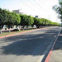 Avenida en Teopanzolco.JPG, Куэрнавака