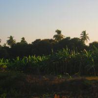 Huertas en El Filo, Nayarit, Текуала