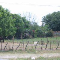 Carretera 85  Linares 5