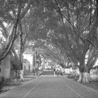 Calle al Cerro del Fortín, Oaxaca, Техуантепек