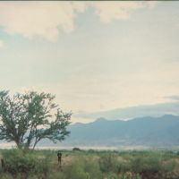 Guamuchil cerca de Tlacolula, Тлаколула (де Матаморос)