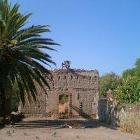 Nopal arriba de antigüo muro de de casa de adobe, Тлаколула (де Матаморос)