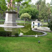 오리 두마리 Centro Park at San Luiis Potosi, Сбюдад-де-Валлес