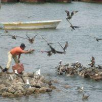 Dando de comer a las aves marinas, Гуэймас