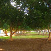 Un oasis verde- el Boulevard Ignacio Ramírez, Cd. Obregón, Son., Емпалм