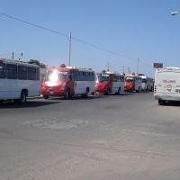 camiones SUBA, Сьюдад-Обрегон