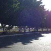 arboles, Сьюдад-Обрегон