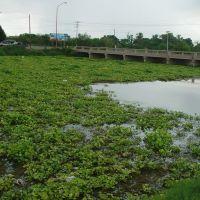 Canal lleno de Patitos, Хероика-Ногалес
