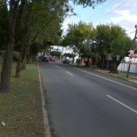 Calle, Риноса
