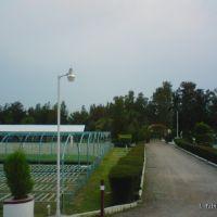 Vivero Forestal Militar, Амека