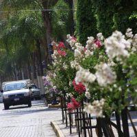 Arandas centro Mexico flores, Арандас