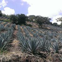 Paisaje agavero de Jalisco, Атотонилко