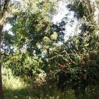 """vegetación en  """"Las Indias"""", Ла-Барка"""