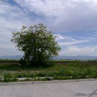 This Tree, Сьюдад-Гузман