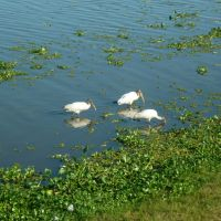 Aves Silvestres, Тукстла-Гутьеррес