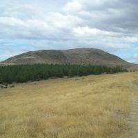 Mount John, Peninsula walkway, Гор