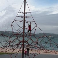 Spider web - climbing, Веллингтон
