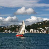 Sailing regatta on Wellington harbour, Ловер-Хатт