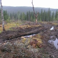 Swedish forestry at Gråvalen 2008 2, Боде