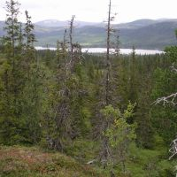 Valen unprotected old-growth forest 3, Боде