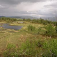Stortissvatnet unprotected mountainous forest, Боде